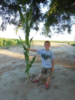 Image result for boy with cornstalk